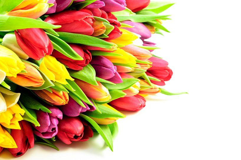 Tulpen Mix Bos Liggend Links sur Erwin Plug