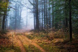 Hoog Buurlose bos van