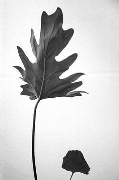 Blätter von Patrick Dreuning