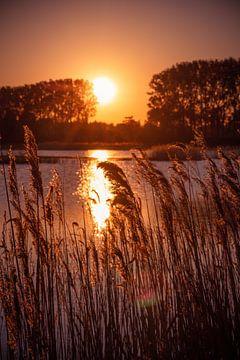 Zonsondergang bij de Dordtse Biesbosch van Petra Brouwer