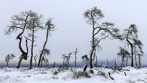 Het verbrande bos van Peter Poppe