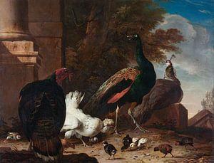 Een hen met pauwen en een kalkoen, Melchior d'Hondecoeter van