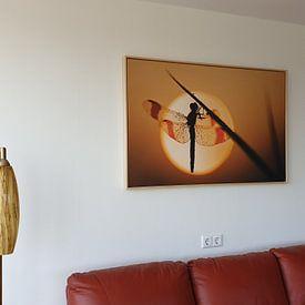 Photo de nos clients: Bandheidelibel bij zonsopkomst sur Erik Veldkamp