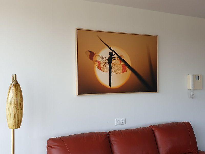 Klantfoto: Bandheidelibel bij zonsopkomst van Erik Veldkamp