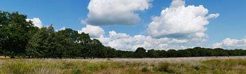 Heideterrein op het landgoed De Klencke van Wim vd Neut
