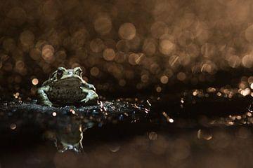 Pad in de nacht von Elles Rijsdijk