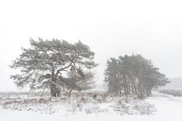 De heide in de sneeuw van Danielle Bosschaart
