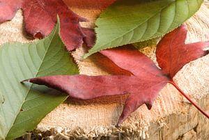 Herfst op een houtblok.