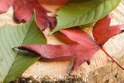 Herfst op een houtblok. van