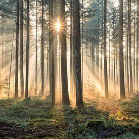 Een dromerige herfst ochtend in het bos van Cor de Hamer