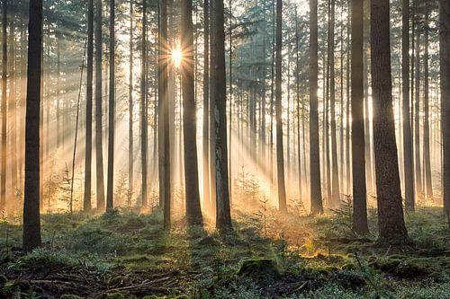 Een dromerige herfst ochtend in het bos van
