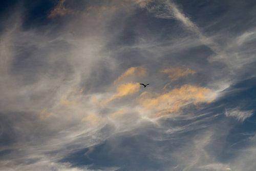 zeelucht met vogel silhouette - 2