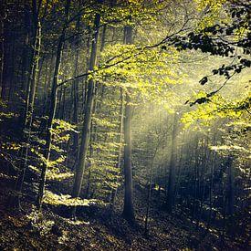 Eenzaamheid in het bos van Dirk Wüstenhagen