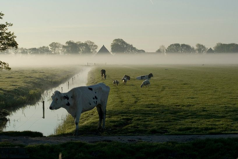 Weiland in de ochtend van Bas Smit