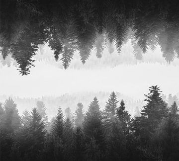 Schwarz-weißer nebliger Spiegelwald von Patrik Lovrin