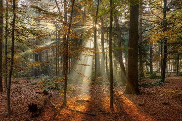 Sonnenharfen I der Herbstwald von Dennisart Fotografie