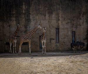 Giraffen- und Straußen-Anhänger