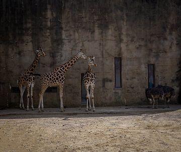 Giraffen- und Straußen-Anhänger von Arash Mahdawi Nader