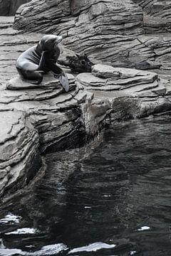 zeehond / Seal / phoque van melissa demeunier