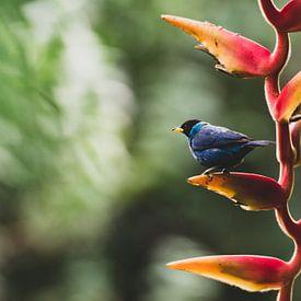 Vogel in botanische tuin Quindío van Ronne Vinkx