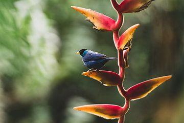 Vogel in botanische tuin Quindío sur Ronne Vinkx
