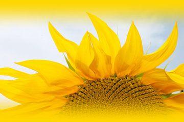 sunflower van M.A. Ziehr