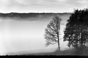 Groep bomen in de mist van CSB-PHOTOGRAPHY