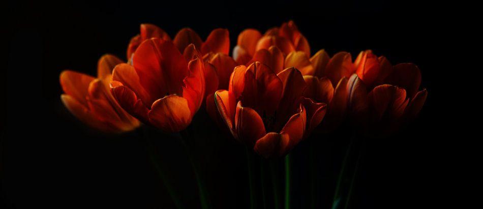 Tulpen II van Pieter Navis