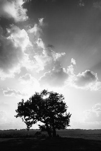 Als de zon door de wolken en de takken speelt in zwart-wit
