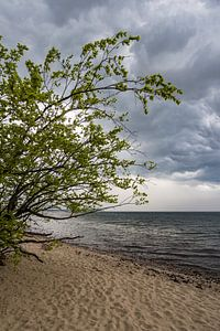 Tree on shore of the Baltic Sea