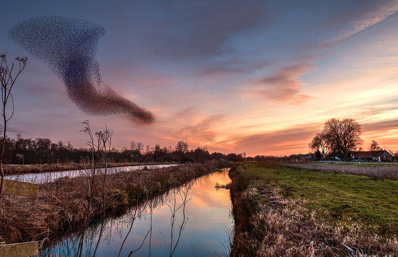 Spreeuwen van Robin Pics (verliefd op Utrecht)