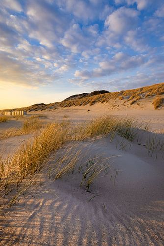 Warm avondlicht valt op het duin landschap aan de kust bij Westerschouwen op Schouwen-Duivenland in