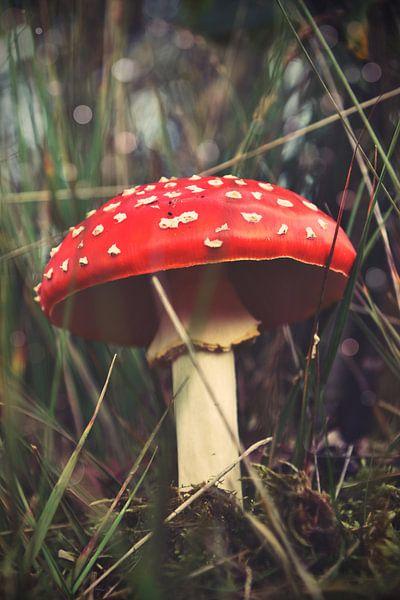 Op een grote paddenstoel... van Janne Reinders