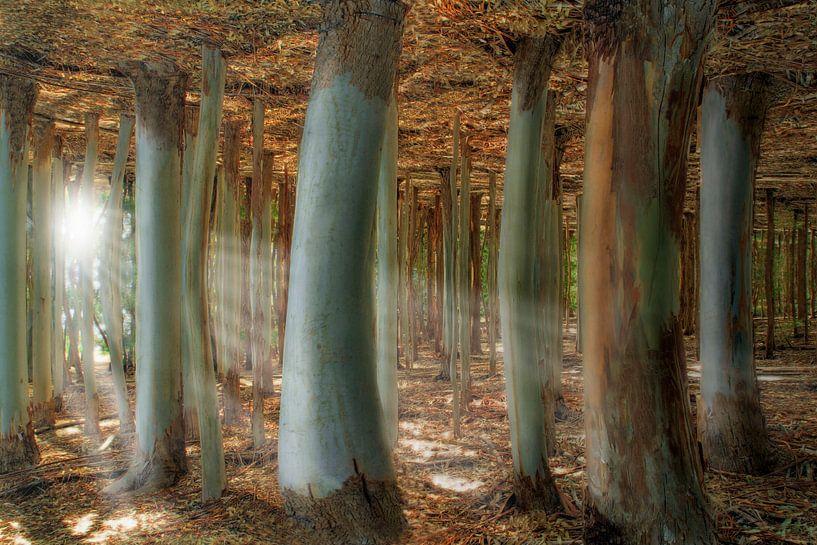 Odd Forest van Melanie Viola