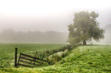 Mistige weide met een boom, sloot en hek van Mark Bolijn