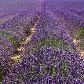 Eindeloos Lavendel van JPWFoto