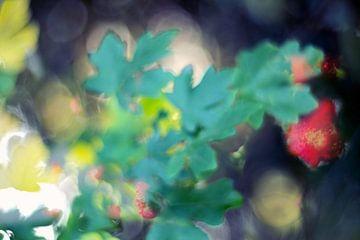 Herfst tuin van Marianna Pobedimova
