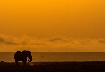Eléphant à Amboseli, Kenya sur