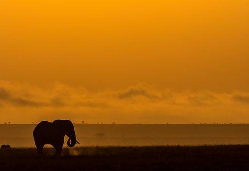 Olifant in Amboseli, Kenia