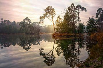 Wälder und Moore von Geri van den Boom