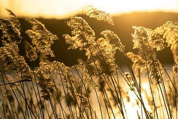 licht en wind von Dirk van Egmond