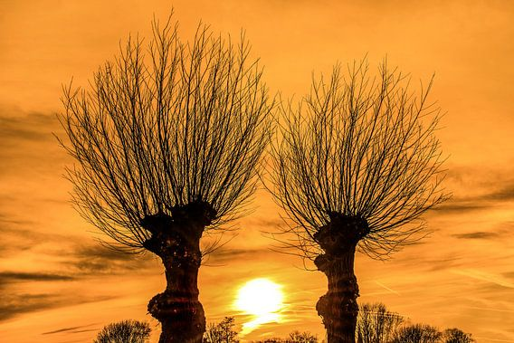 Zonsondergang tussen twee wilgenbomen in het Friese platteland
