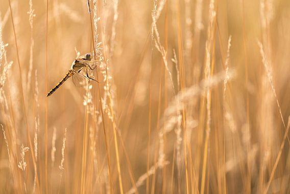 Heidelibelibel noir avec rétro-éclairage