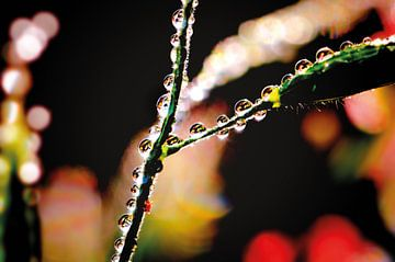 Farbenfrohe Wassertropfen