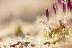 Het voorjaarsgevoel