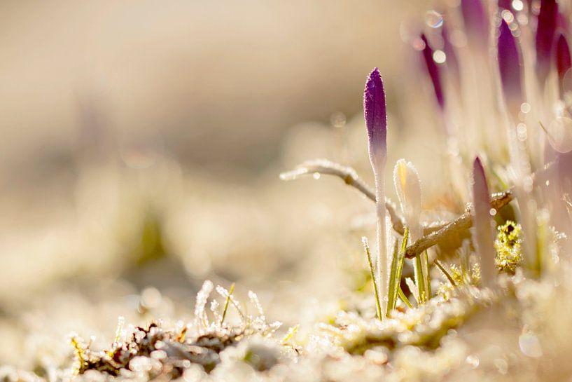 Het voorjaarsgevoel van Jaco Hoeve