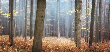 Herbstfarben im Wald von Tobias Luxberg