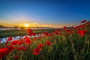 Poppy Colors I