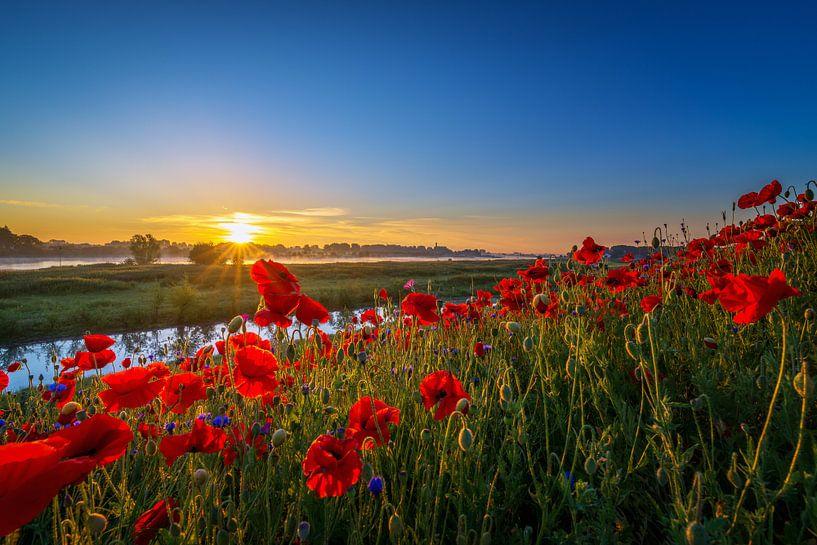 Poppy Colors I van Sander Peters Fotografie