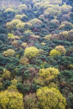 Bomen van boven van
